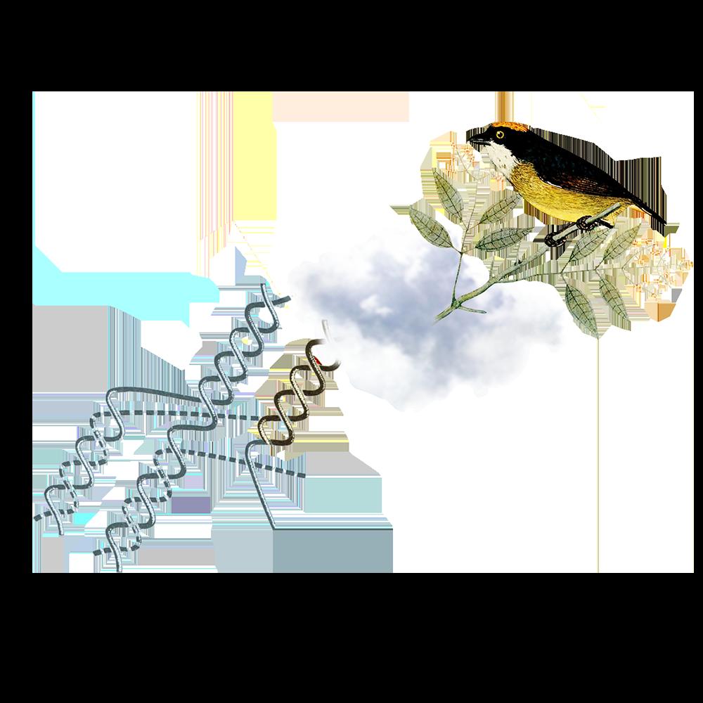 Tävlimgsvillkor & bedömningskriterier - Bild på en liten fågel