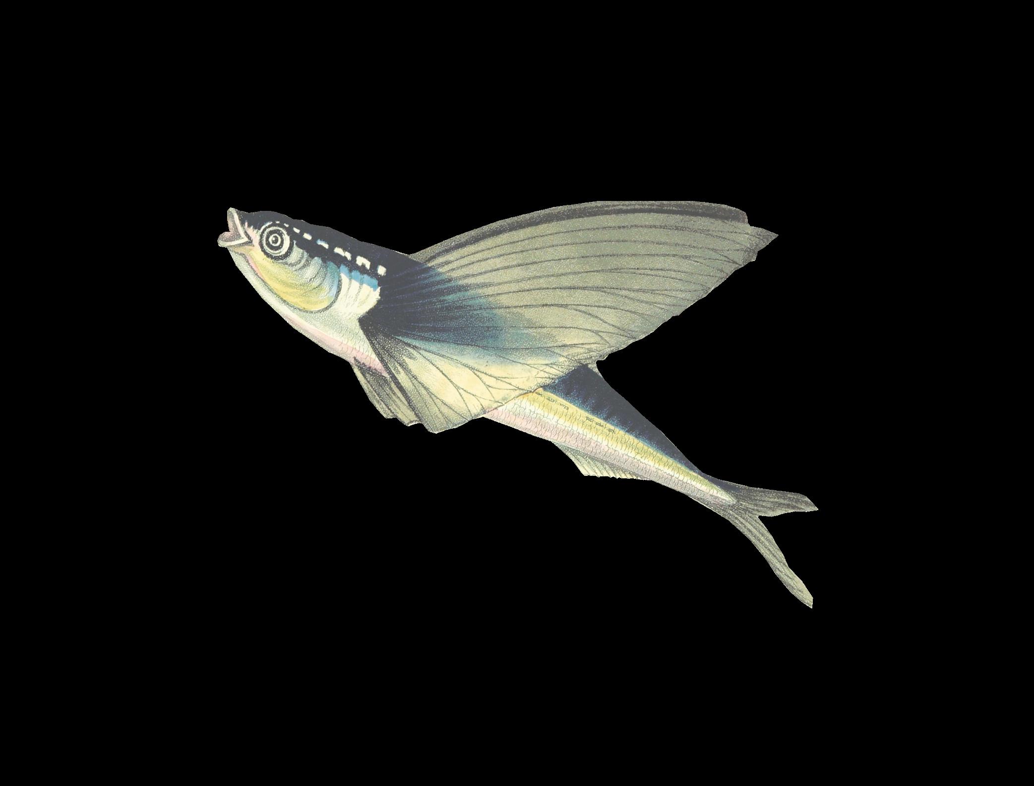 Bild på en fisk
